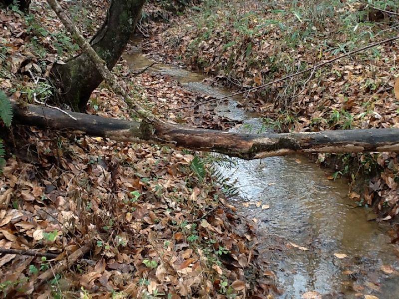 County Road 11 Tract : Panola : Crenshaw County : Alabama