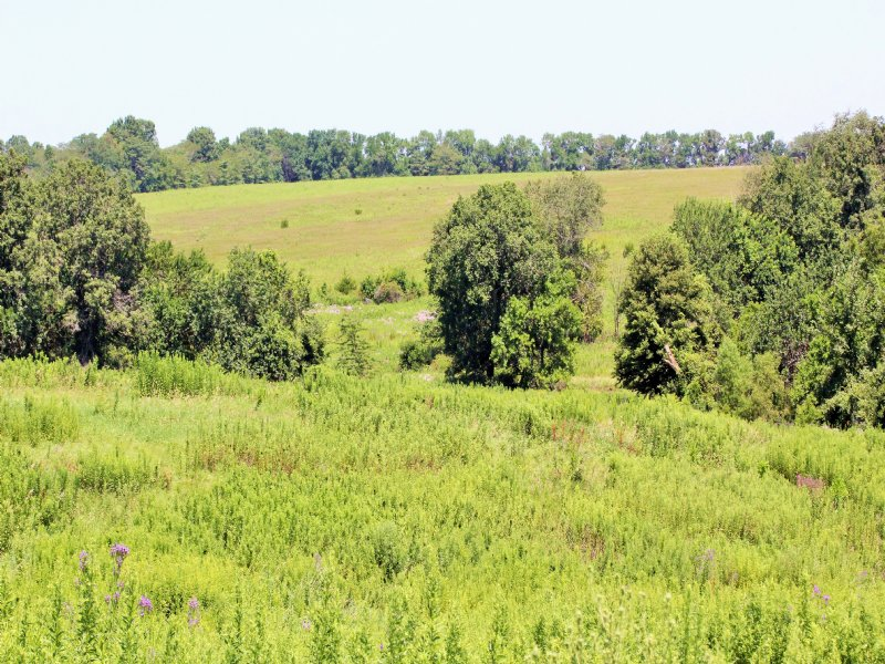 56 Acres : Memphis : Scotland County : Missouri