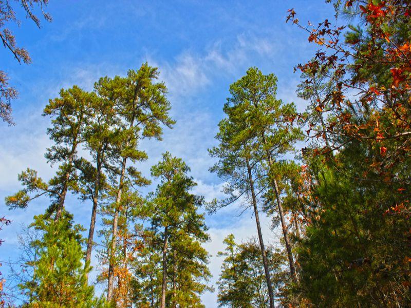 710 Acres I-45 West : Huntsville : Walker County : Texas