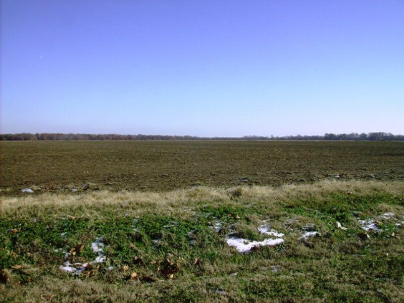 257 +/- Acre Farm For Sale : Stuttgart : Prairie County : Arkansas