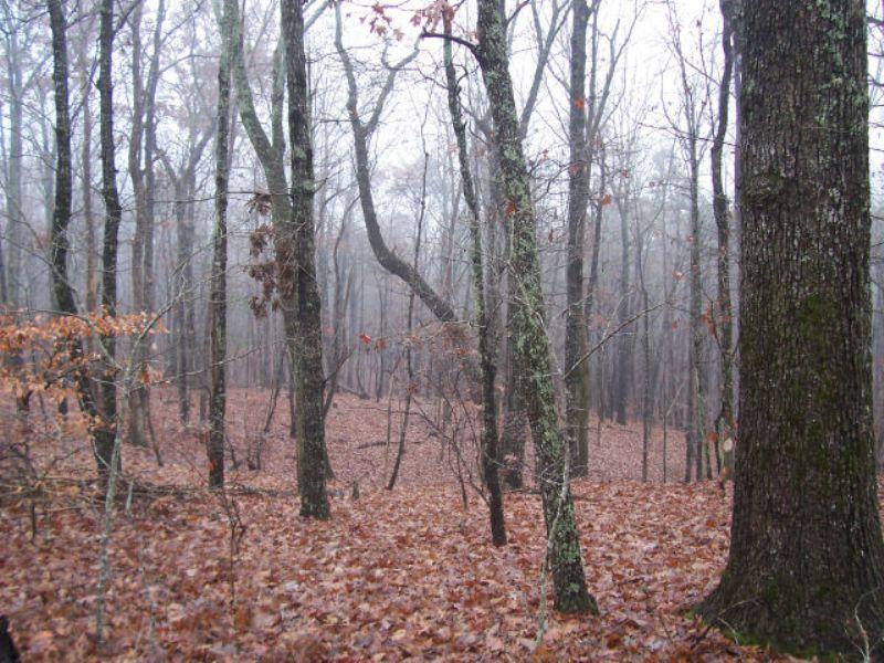 Wooded 37.12 Acres : Baldwin : Banks County : Georgia