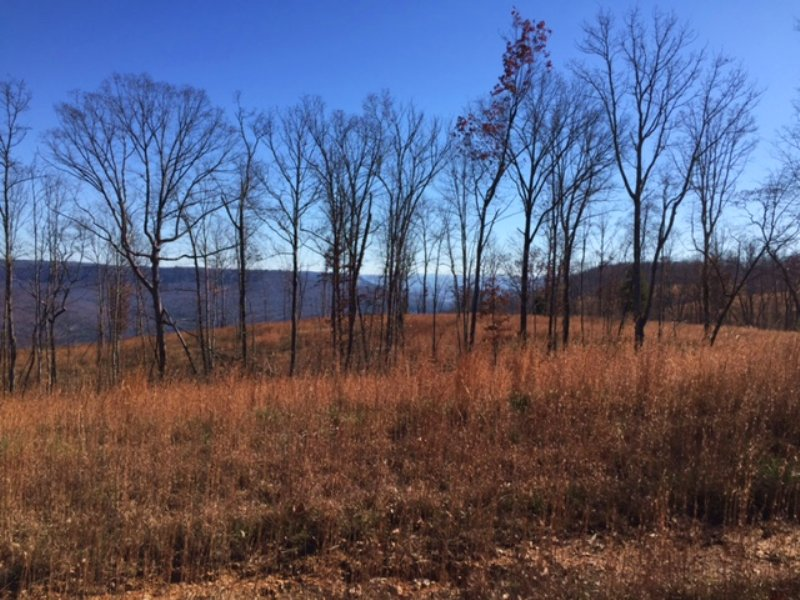 Owner Financing 7.44 +/- Acres : Sewanee : Marion County : Tennessee