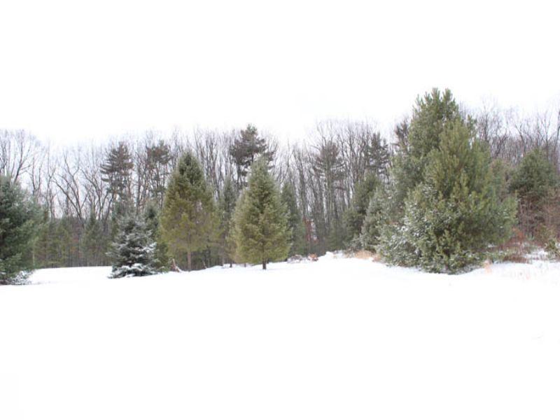 16 + Acre Country Estate : Millville : Columbia County : Pennsylvania