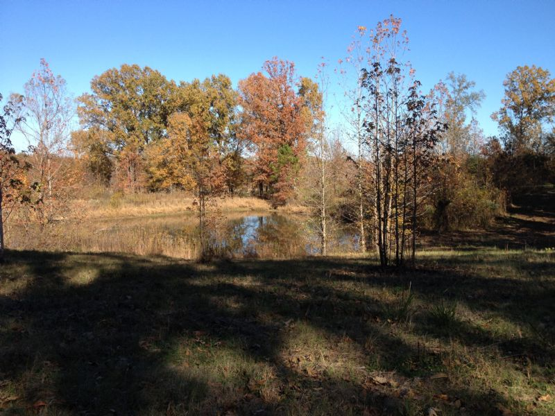 Great Hunting Property : Ebenezzer : Holmes County : Mississippi