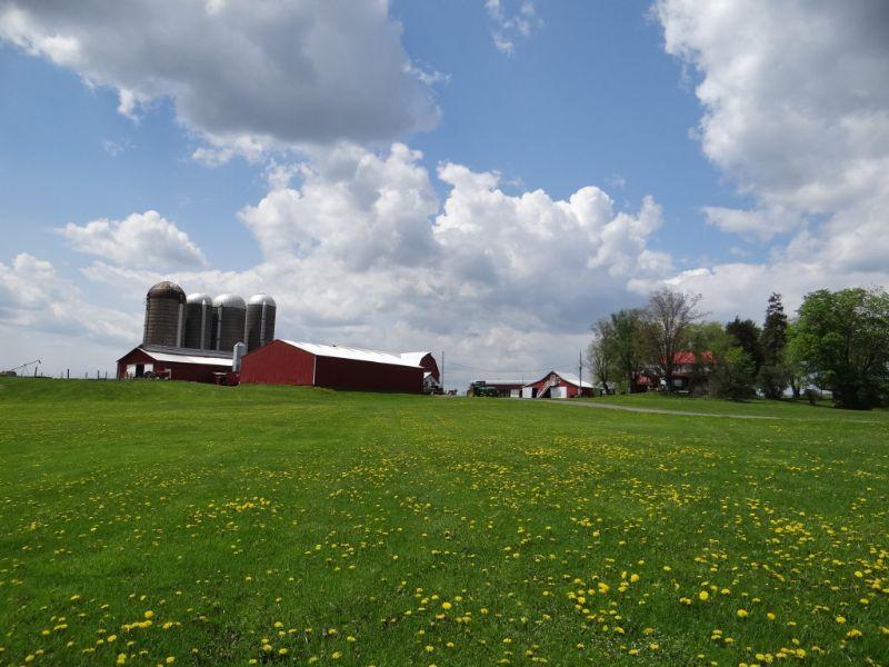 Organic Dairy Farm 345 Acres Barns : Nichols : Tioga County : New York