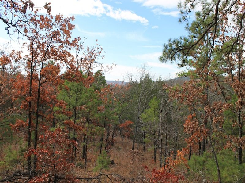 Indian Ridge Oklahoma Land Terms : Daisy : Pittsburg County : Oklahoma
