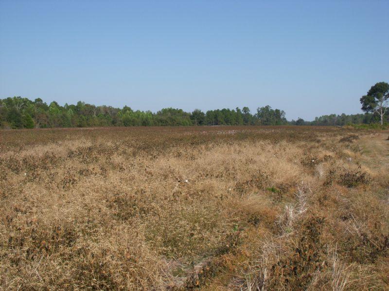 Hartley Road Farm : Alamo : Wheeler County : Georgia