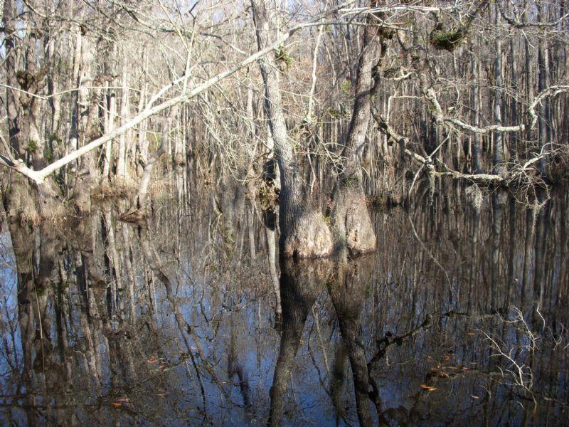 Miller Pond : Soperton : Treutlen County : Georgia