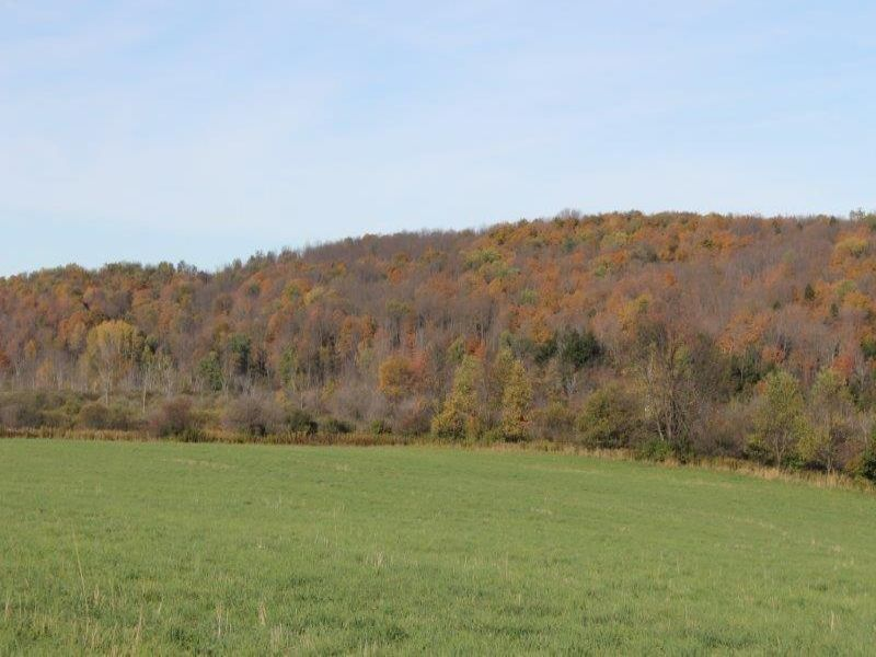 21 Acres Farmland Owner Financing : Eaton : Madison County : New York
