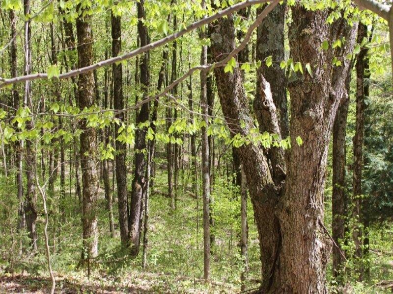 Timberland Near Forests 61 Acres : Florence : Oneida County : New York