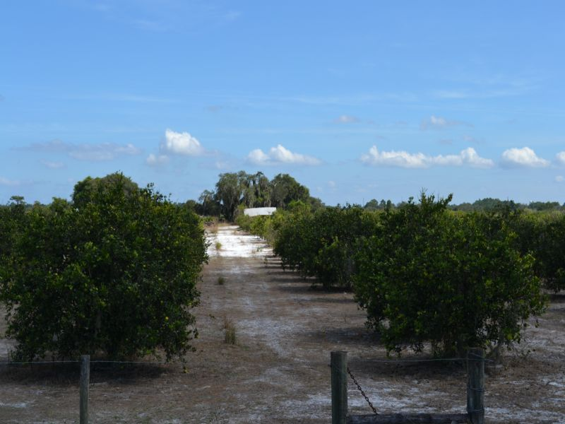 Frostproof Grove And Acreage : Frostproof : Polk County : Florida