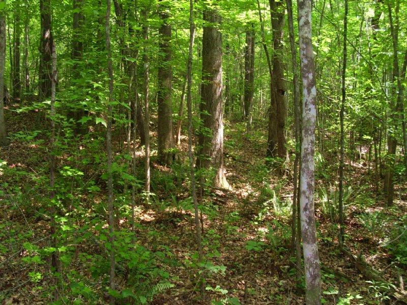 Oakridge Tract : Cusseta : Chambers County : Alabama