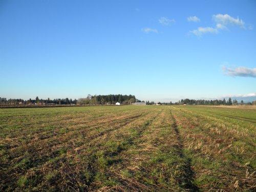 284 Acres Of Level Farmland : Toledo : Lewis County : Washington