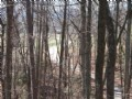 +/- 19.85 Beautiful Wooded Acres