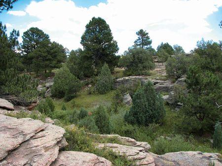 Running Creek Preserve : Elbert County : Colorado