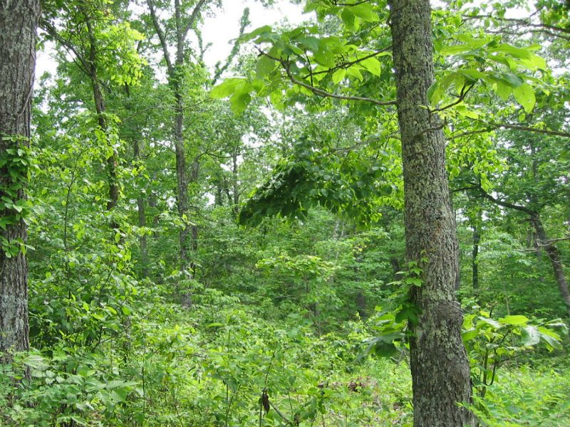$500 Down - 14 Acre Hunting Tract : Hartville : Wright County : Missouri