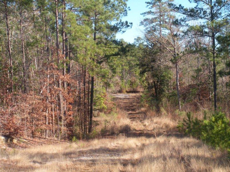 129.5+/- Acres For Sale Forest Hill : Forest Hill : Rapides Parish : Louisiana