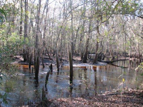 Lotts Creek Trestle : Nevils : Bulloch County : Georgia