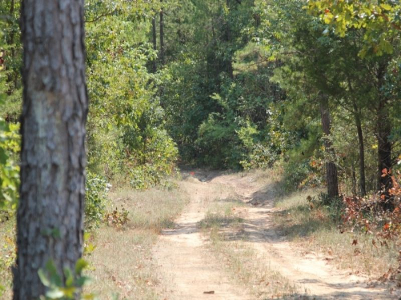 9.94 Acres With Cabin And Electric : Clayton : Pushmataha County : Oklahoma