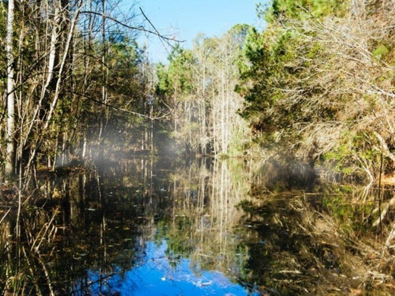 Juniper Creek : Greensboro : Gadsden County : Florida