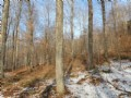 Powder Spring Brook Forest