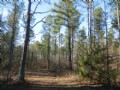 35.61 Ac Retreat Or Hunting Tract : Crawford : Oglethorpe County : Georgia