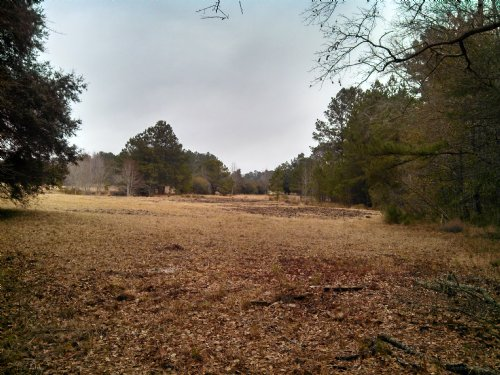 Old Louisville Homesite : Guyton : Effingham County : Georgia