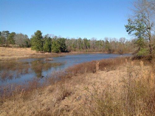 Patton Tract : Brierfield : Bibb County : Alabama