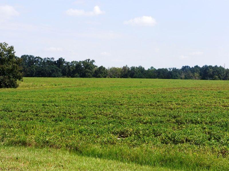 Hilton's Folly : Blakely : Early County : Georgia