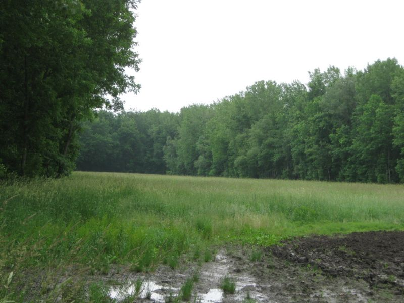 227 Acres Hunting & Fishing Land : Galen : Wayne County : New York