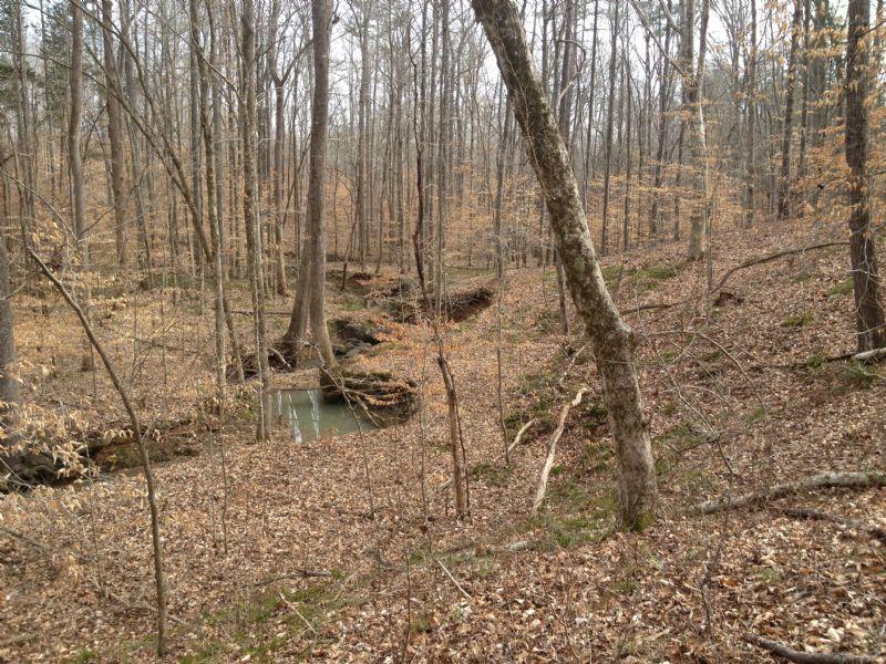 Quail Ridge Road Tract : Abbeville : Abbeville County : South Carolina