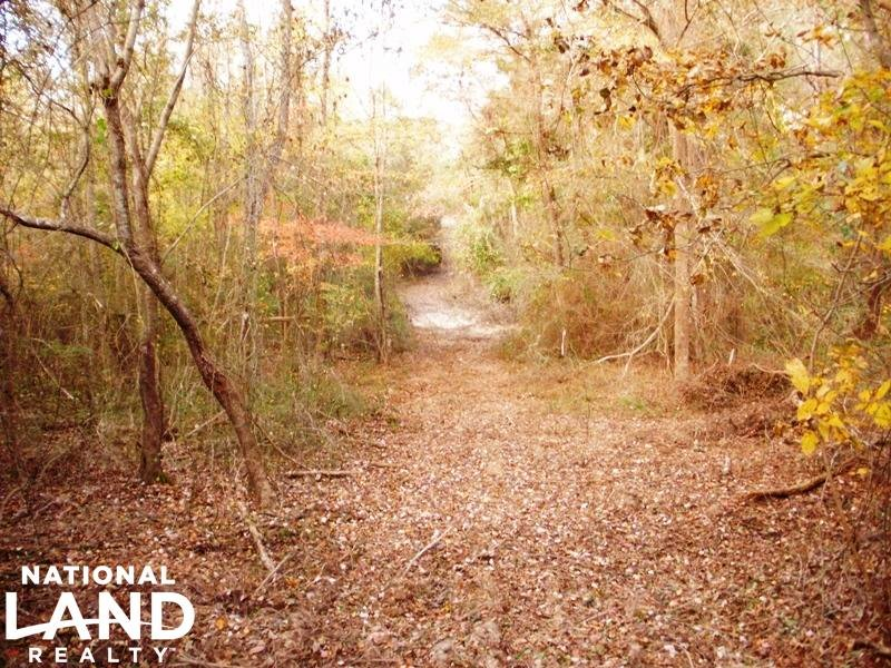 Hunting And Timber Tract : Dixon : Neshoba County : Mississippi