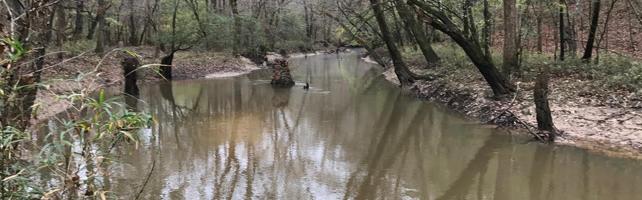 Outstanding Mature Hardwood Timber : Perote : Bullock County : Alabama