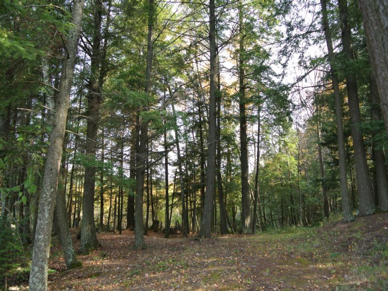 Lot 3 Lakeshore Drive On Mid Lake : Woodruff : Oneida County : Wisconsin