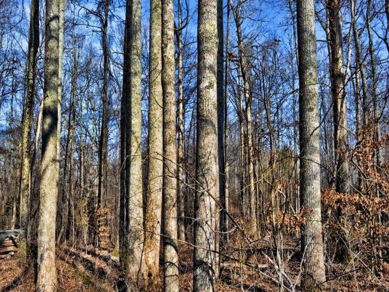 7.32 Acre Wooded Home Site : Campobello : Spartanburg County : South Carolina
