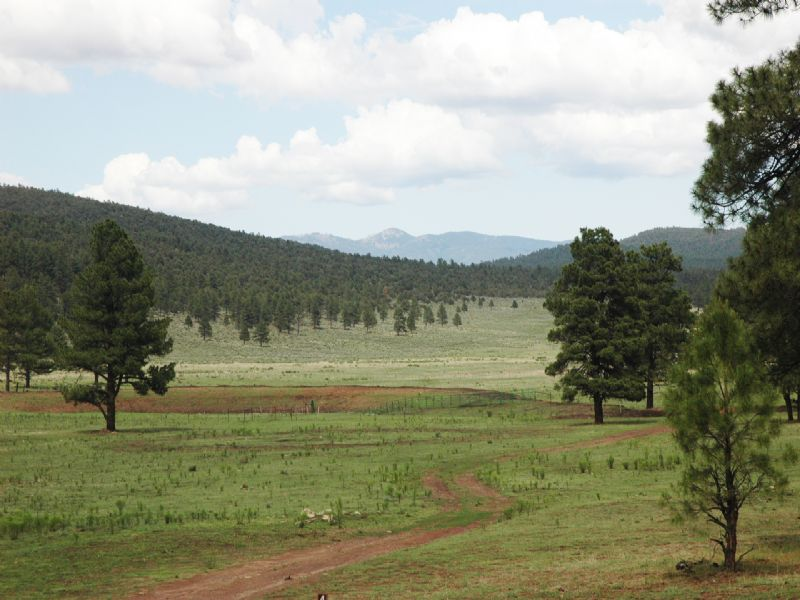 Rainy Mesa Ranch - Private Big Game : Reserve : Catron County : New Mexico