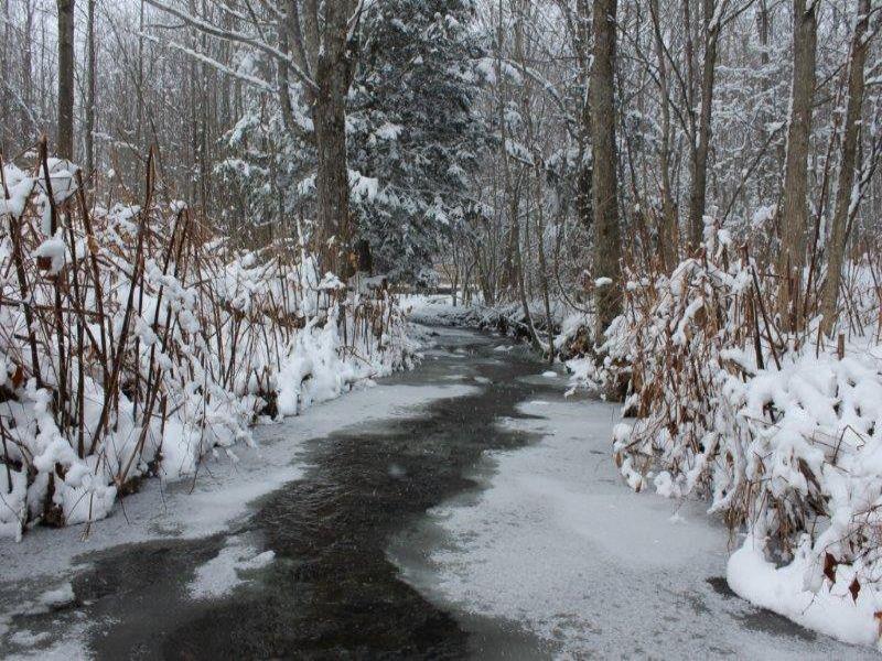 Woodland Paradise : Lee : Oneida County : New York