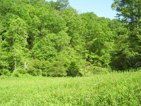 Roberts Tract : Island City : Owsley County : Kentucky
