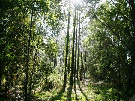 Watkins Place : Monticello : Jefferson County : Florida