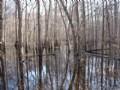 Ebenezer Creek Tract