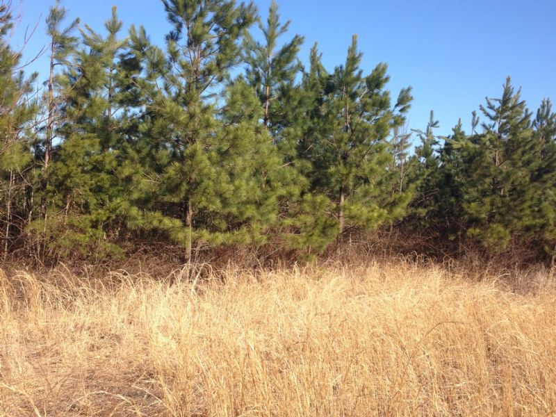 47 Acre Timberland Tract : Cumberland : Cumberland County : Virginia