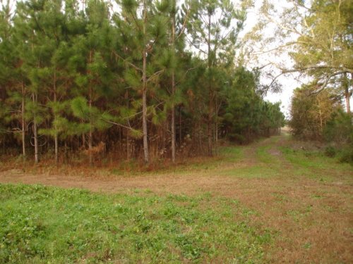 16.73 Acre Tract : Hartsfield : Colquitt County : Georgia