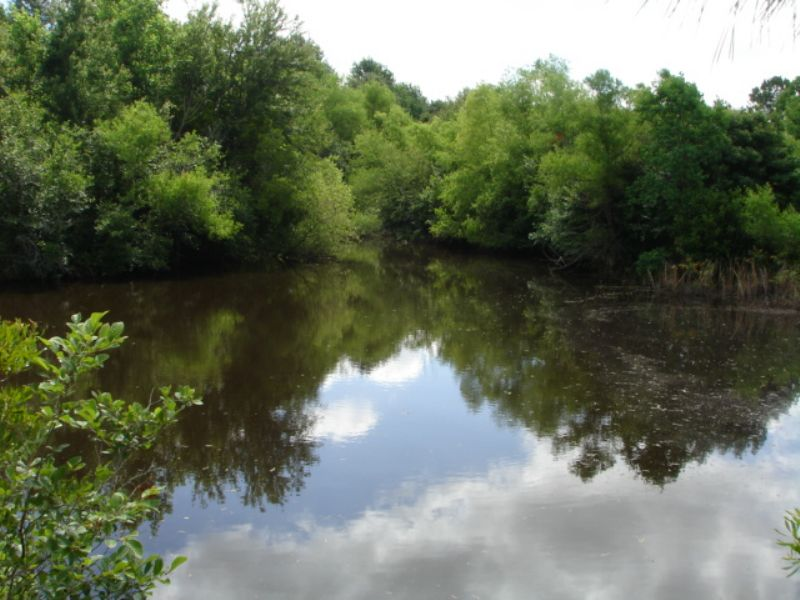 54 Acre Tract : Hartsfield : Colquitt County : Georgia