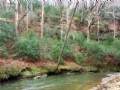 34 Acres With Creek Frontage