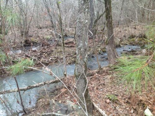 22.7+/- Acres Timberland : Talladega : Clay County : Alabama