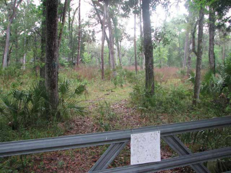 182 Acres Waterfront 763813 : Gulf Hammock : Levy County : Florida