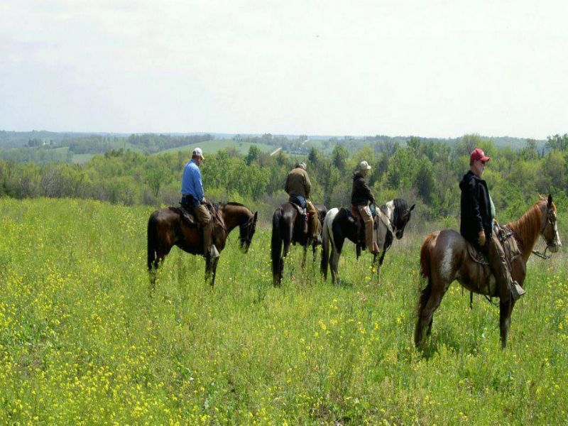 Bird Dog Ranch : Thayer : Union County : Iowa