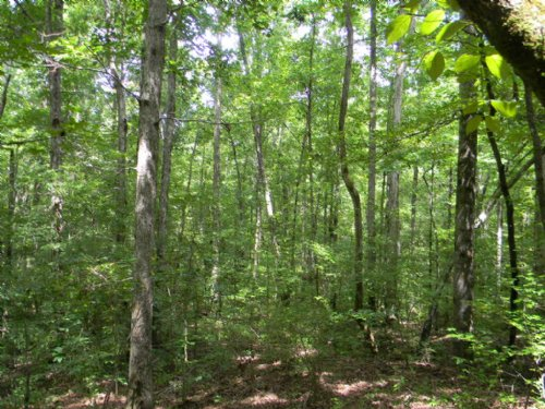 82.44 Acres & House : Central : Elmore County : Alabama