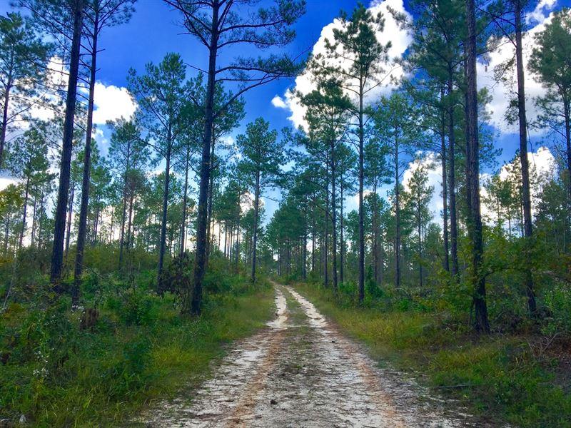 29-015 Adkins Road Timber : Wetumpka : Elmore County : Alabama