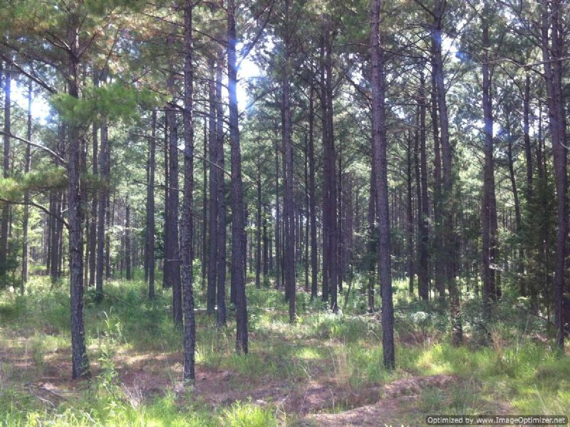 178 Acres : Sallis : Attala County : Mississippi